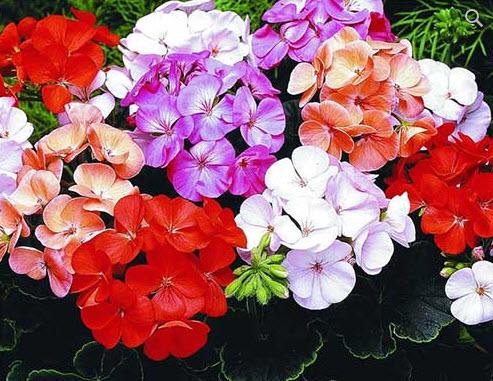 Цветы комнатные приносящие в дом счастье