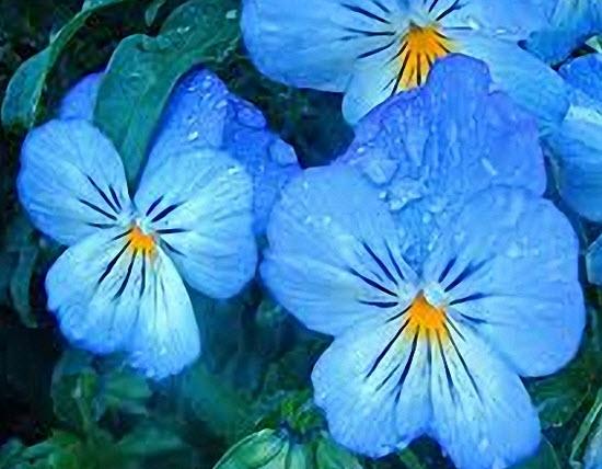Аудиокниги друнвало мельхиседек цветок жизни