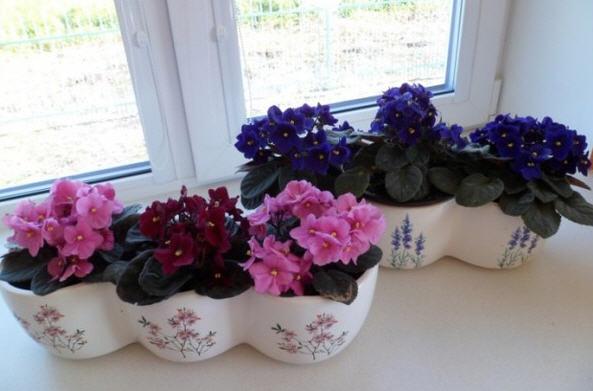 Цветы для северного окна