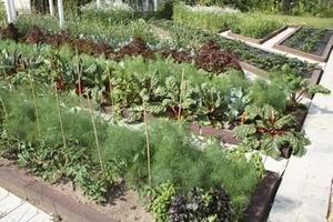 Порядок на грядках: какие растения несовместимы друг с другом 30