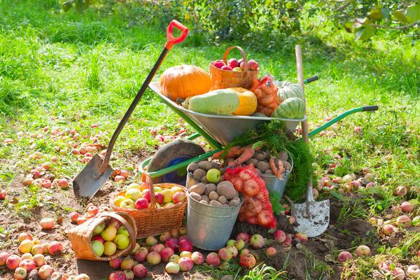 Работы в сентябре в саду и огороде