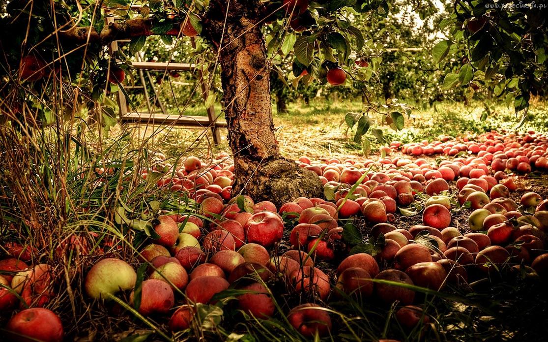 Чем подкормить деревья  Дачные советы
