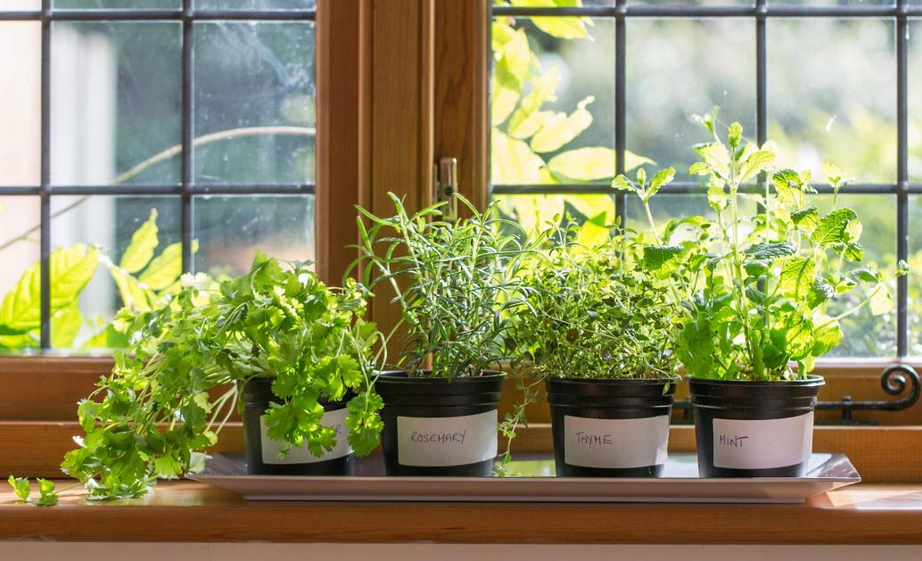 Полезные растения выращивание дома