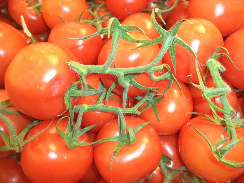 Новые сорта томатов на 2018 год для открытого