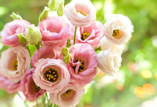 Живые цветы ерландцкой розы цветы в вакууме купить в новосибирске