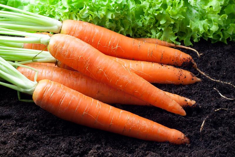 Когда сажать в мае морковь 57