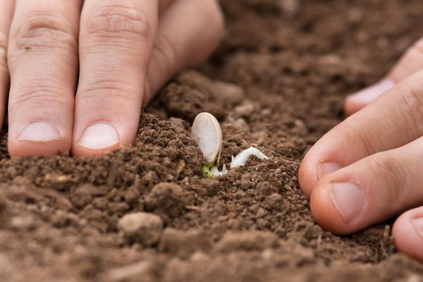 Семена сеют или сажают 866