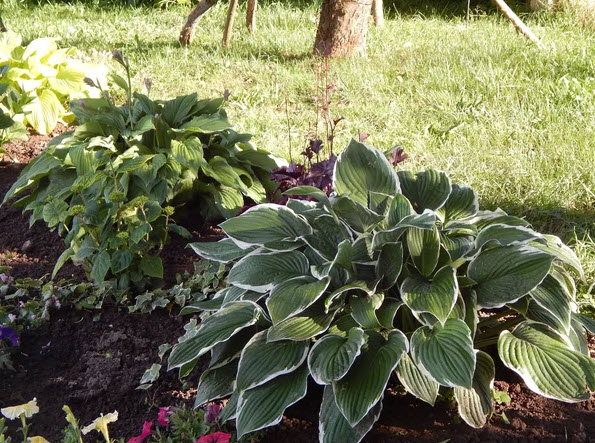 как посадить арахис дома на огороде советы
