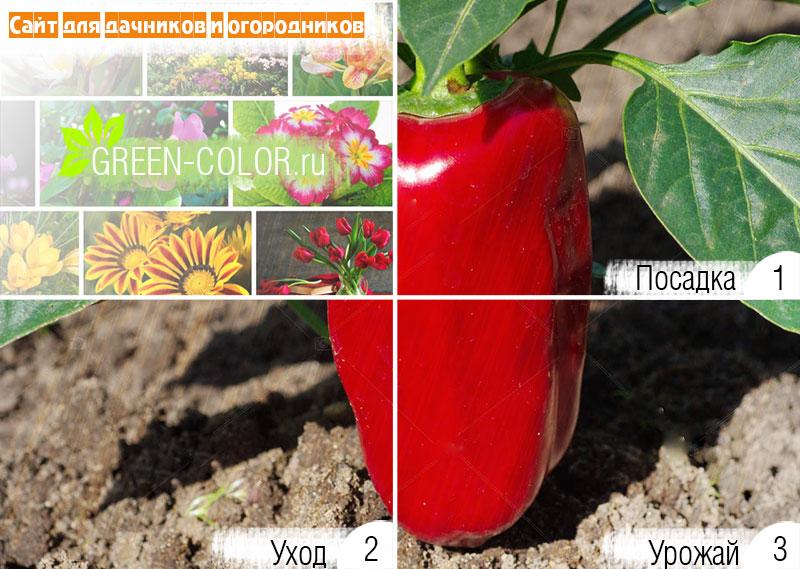 Рассада 2019 - когда нужно сажать помидоры, баклажаны и перцы на рассаду в 2019 году
